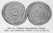Doppelspiral-Ornamentik, Breslau, RdgA Bd3, Abb.024