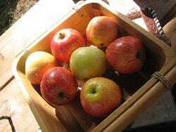 Äpfel Castra Aequitatis 2012-07-14 1302
