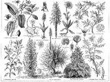 Arzneipflanzen