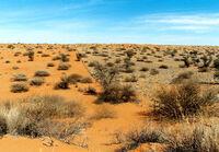 Xerotic Desert