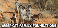 Meerkat Family Foundations