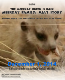 Meerkat Family- Mia's Story
