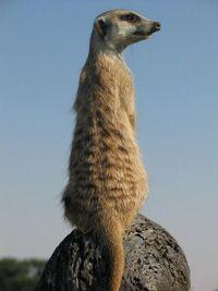 Drew Guarding on termite mound