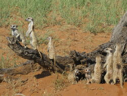 Cheetah Mob