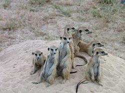 Minions Mob