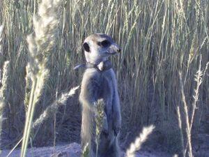 Lizzy Iguana