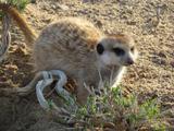 Peg Leg Lemurs