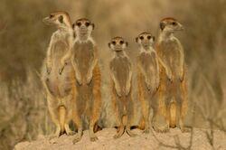 Aristocats Mob