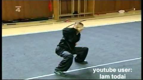 Hung Gar demo Lam Chun Fai, Brno, 2008, 洪拳