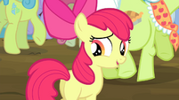 "Apple Bloom ""aren't you curious?"" S4E20"