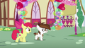 Apple Bloom talking to Pipsqueak S8E10.png
