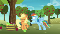 Rainbow Dash shouting at Applejack S8E5
