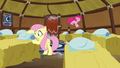 Fluttershy and Pinkie Pie making yak beds S7E11.png