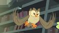 Owlowiscious hooting to Spike S4E23.png