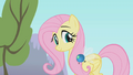 Parasprite burrowing in Fluttershy's mane S1E10.png