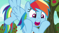 "Rainbow Dash ""nonstop action!"" S6E18"