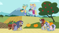 Earth ponies, Pegasi and unicorns S02E11.png