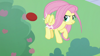 Fluttershy bumps the buckball back S8E24