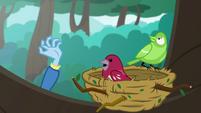 Birds notice Trixie's hand reaching up EGDS10
