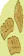 Lavender Fritter cutie mark crop S2E8