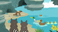 Otter, raccoons, and ducks by the sanctuary creek S7E5