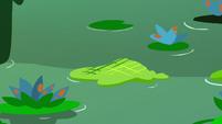 Crisscross moss in the swamp water S7E20