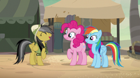 Daring Do laughing with her friends S7E18