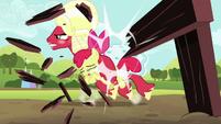 Orchard Blossom breaks through hurdle S5E17