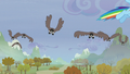 Birds following Rainbow S5E5.png
