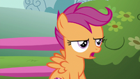 Scootaloo --which is actually impossible-- S6E19
