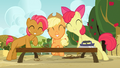 Applejack, Apple Bloom and Babs smiling S03E08.png