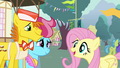 "Fluttershy ""went to see them gathering their pollen"" S4E16.png"