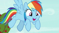 Rainbow Dash -the coolest ride ever to exist- S8E5