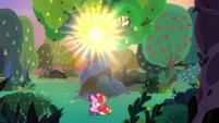 Sun shining through the tree canopy S9E23