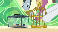 Rarity puts birds next to star spiders S9E26