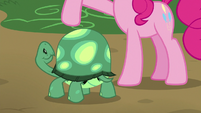 Tank looking up at Pinkie Pie S7E4