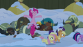 Pinkie Pie pops out of the snow near the yaks S7E11.png