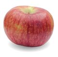 An Apple named Cortland.jpg