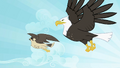 Eagle and falcon flying S2E07.png