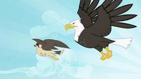 Eagle and falcon flying S2E07