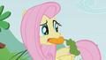 Fluttershy with a carrot in her mouth S1E07.png
