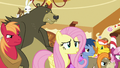 "Fluttershy ""did she get you, too?"" S6E15.png"