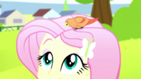 Fluttershy with Constance perched on her head SS14