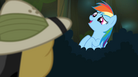 Rainbow Dash giggling sheepishly S4E04