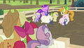 Applejack, Apple Bloom and Sweetie Belle watching pigs S2E05.png
