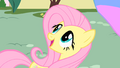 Fluttershy amazed by Philomena S01E22.png