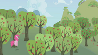 Pinkie Pie follows Rainbow Dash through Sweet Apple Acres S1E05