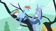 Rainbow Dash facing towards Discord S4E11
