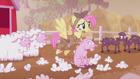 Fluttershy shearing sheep S5E25
