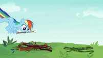 Rainbow Dash gathering tree branches S8E9